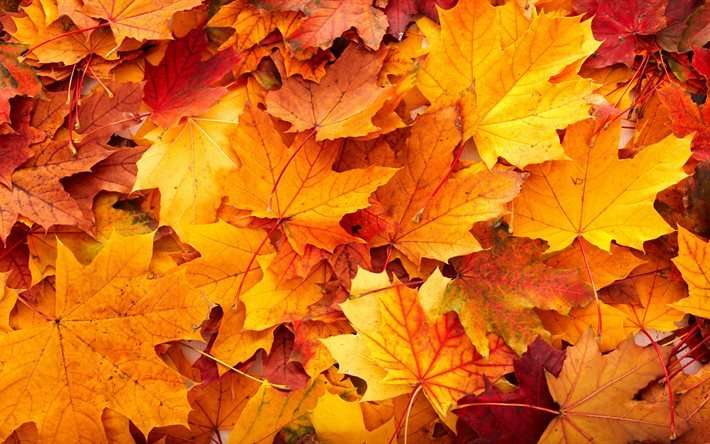 thumb2-autumn-autumn-leaves-fallen-leaves-autumn-landscape